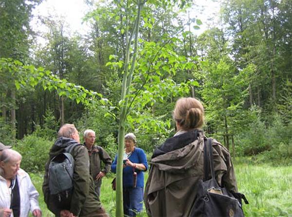 Arboretum Heverleebos in Heverlee (gem. Leuven)