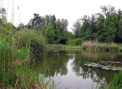 Grote waterpartijen doen het altijd goed in een botanische tuin of arboretum.