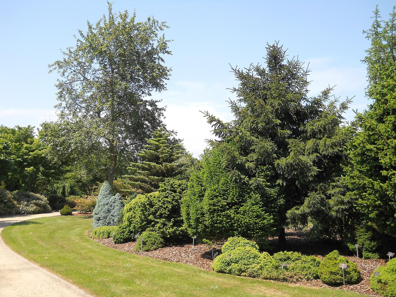 Coniferen in het arboretum