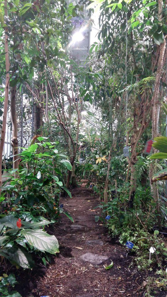 In de tropische kas van Botanische Tuin TU Delft