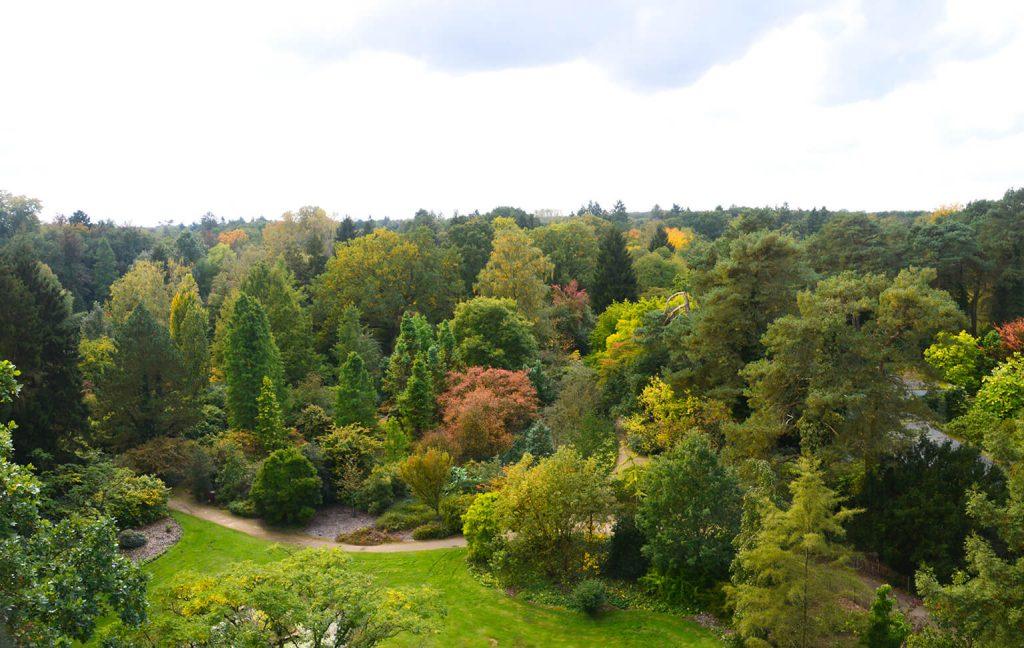 Overzicht arboretum Domein Bokrijk