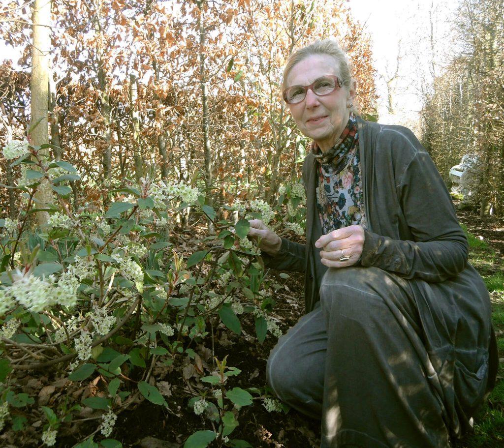Ria naast <i>Ribes laurifolium</i>, een bijzondere winterbloeier