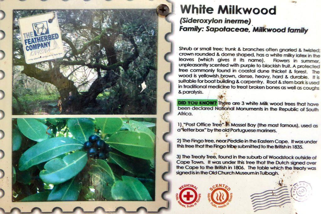 Uitleg over de Milkwood tree