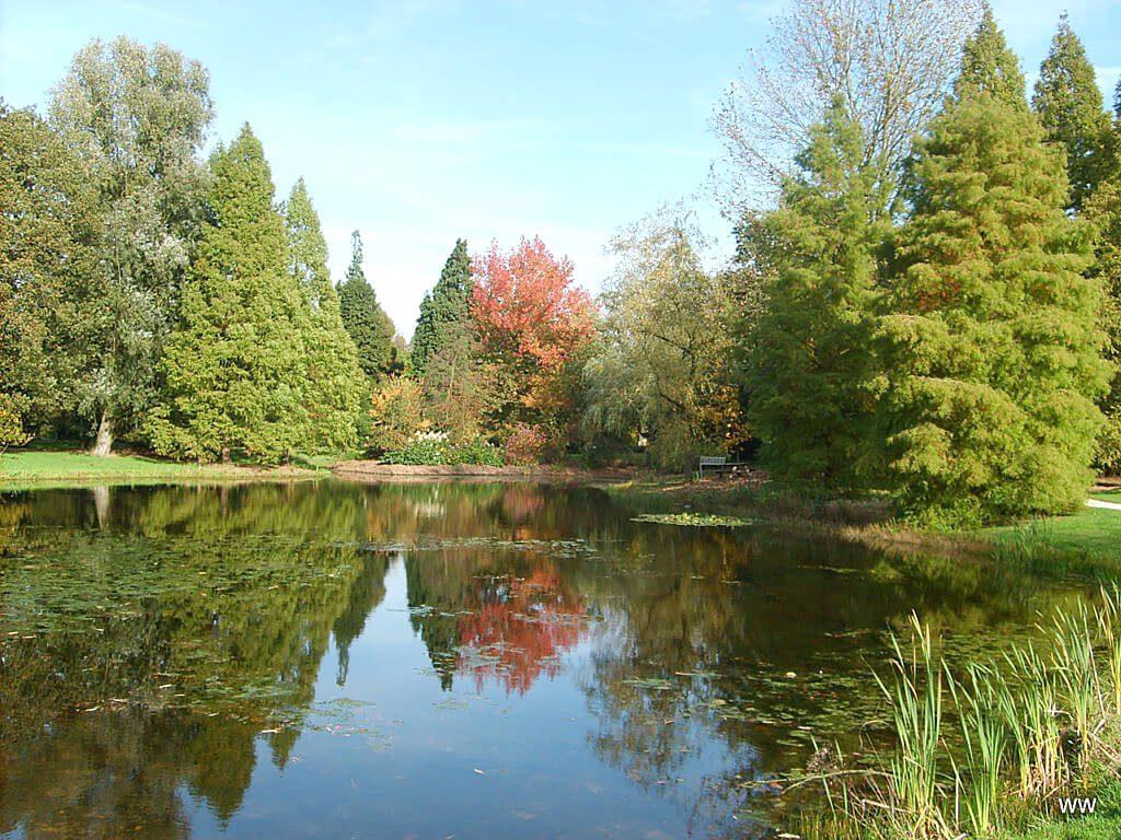 Waterpartij in Nationaal Bomenmuseum Gimborn